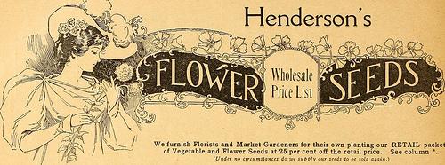 flower-seeds-south-ga-seed-co..jpg