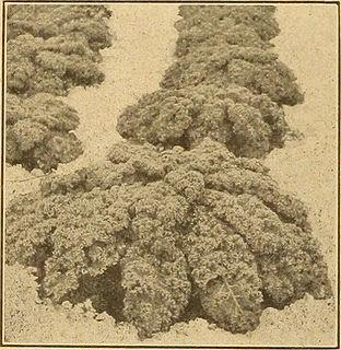 kale-greens.jpg